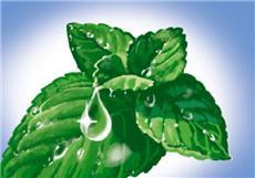 ароматизация воздуха помещения запахом мяты помогает сконцентрироваться
